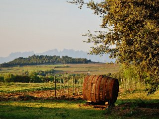 Scenery of the Penedes