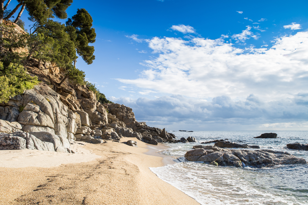 Beach with sand, rocky shore and pine trees