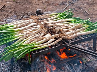 Roasting calçots on an open fire
