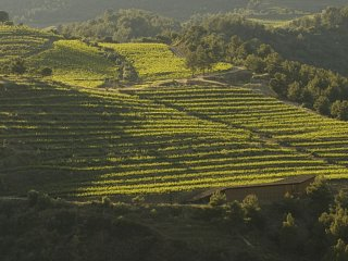 Vineyards in Priorat