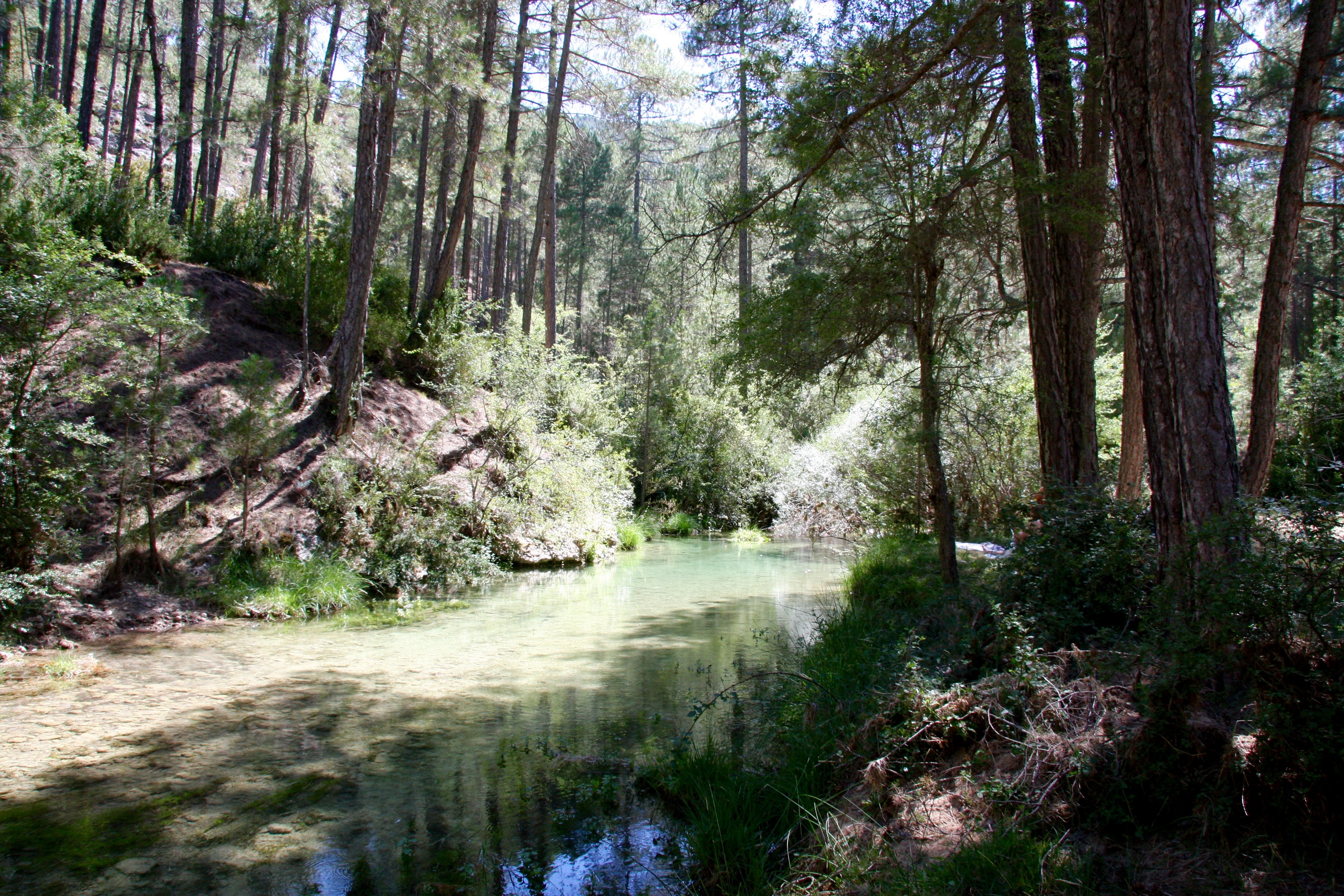 A mountain trout stream in Spain