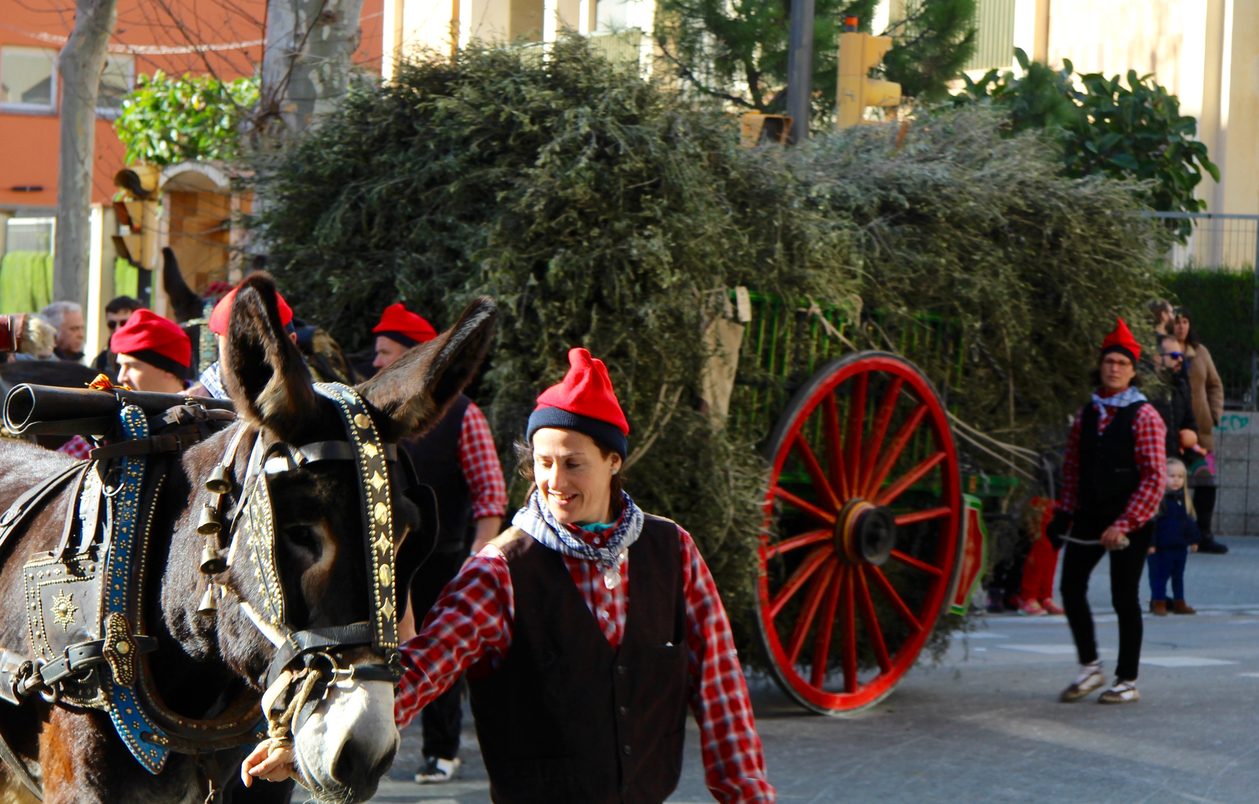 A horse pulling a cart of hay at in a procession