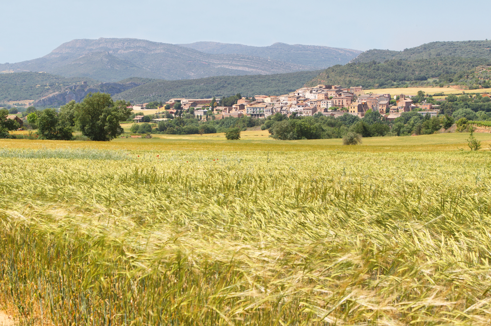 Wheat field with village in the background