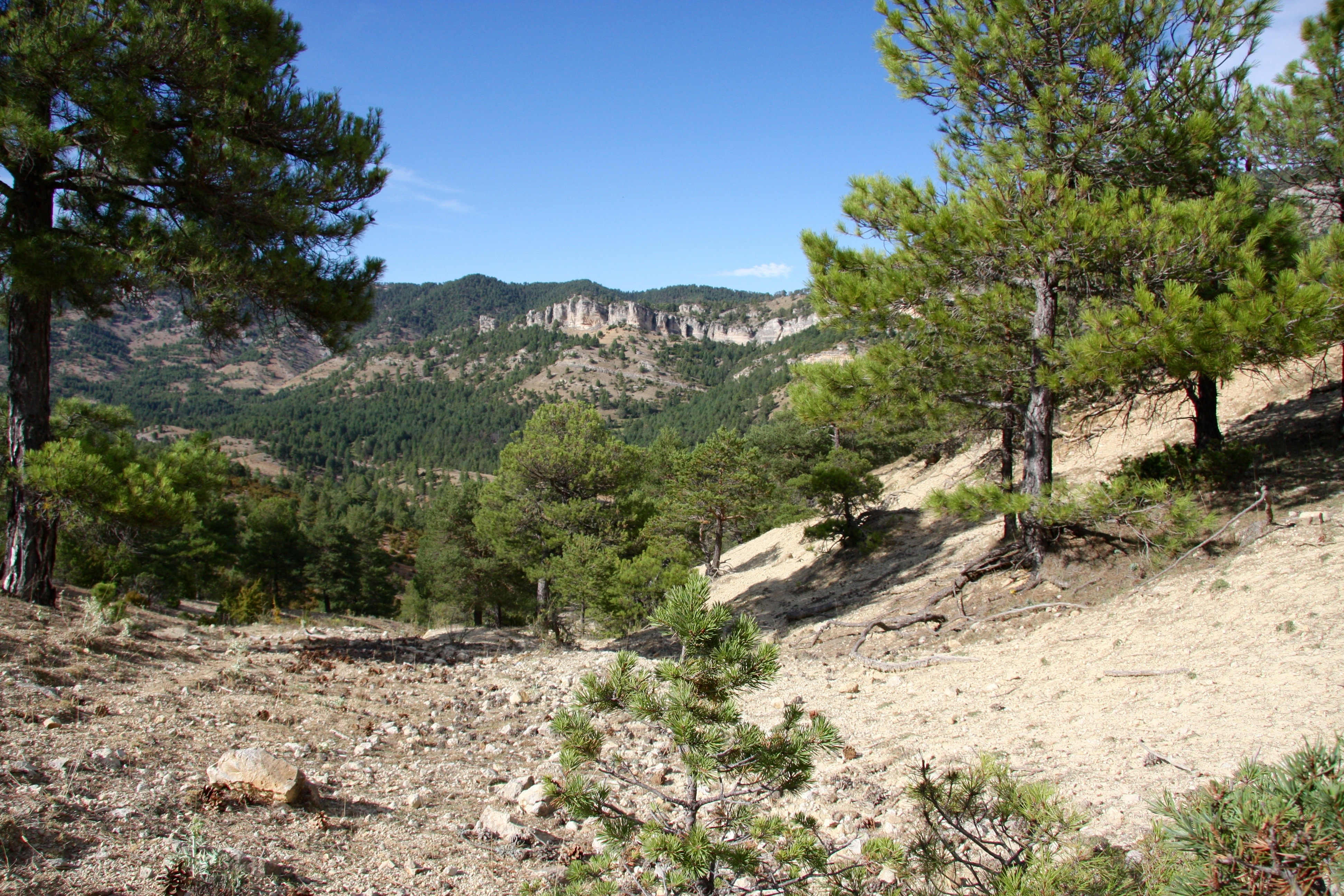 A mountain with pine trees in central Spain